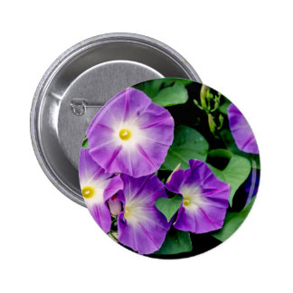 Morning Glory - Purple Flowers Green Leaves Buttons