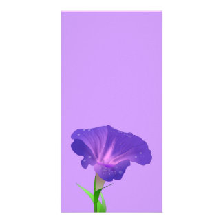 morning_glory_Vector_Clipart flowers Photo Cards