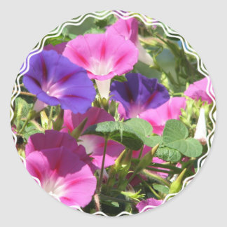 Morning Glory Vines Sticker