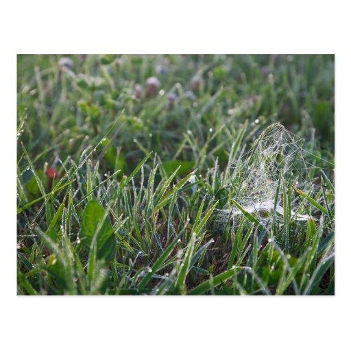 Morning grass postcards