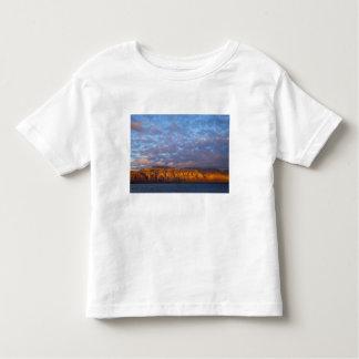 Morning light greets the Sierra de la Giganta T-shirts