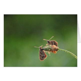 Morning Love - small butterflies Card