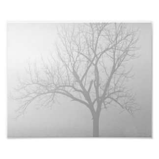 Morning Mist Photo Print