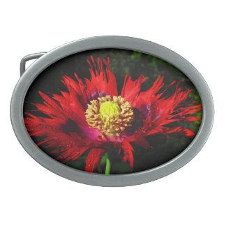 Morning Star Poppy.red Oval Belt Buckles