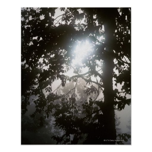 Morning sunlight through foliage of jungle print
