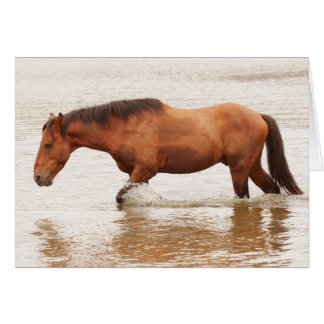 Morning swim for a horse card