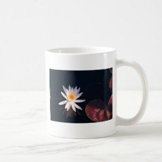 Morning Water Lily Coffee Mug