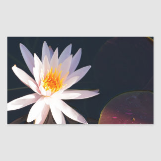 Morning Water Lily Rectangular Sticker