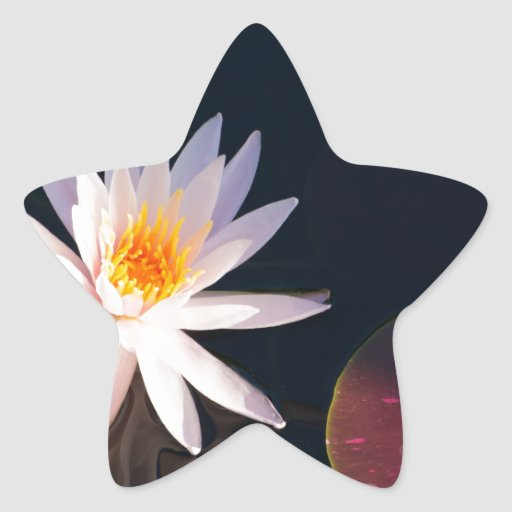 Morning Water Lily Star Sticker