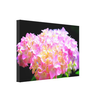 Morning Whisper-pink  Hydrangea Canvas Print