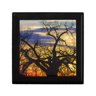 Morning Woods Small Square Gift Box