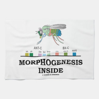 Morphogenesis Inside Drosophila Fruit Fly Genes Tea Towel