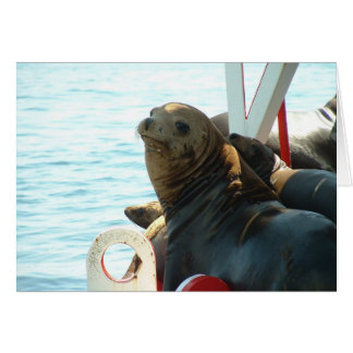 Morro Bay Seal Card