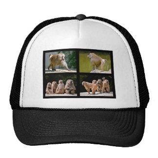 Mosaic photos of baboons cap