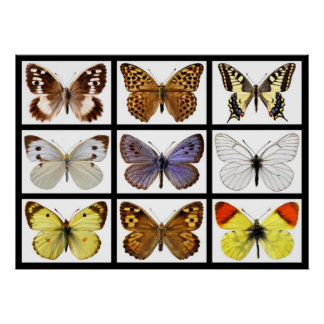 Mosaic photos of butterflies poster