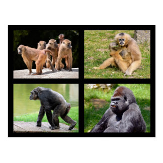 Mosaic photos of monkeys postcard
