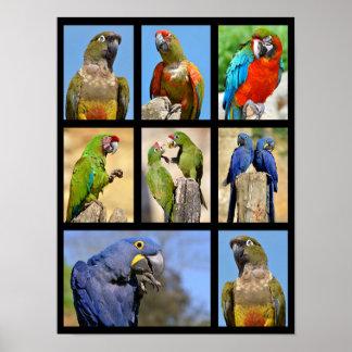 Mosaic photos of parrots poster