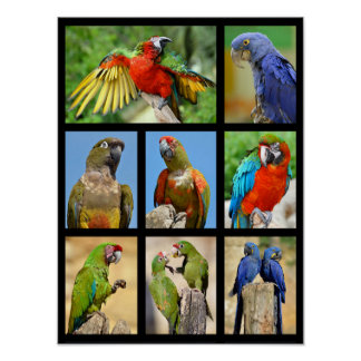 Mosaic photos of parrots poster