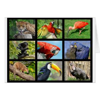 mosaic photos South American animals Card