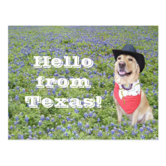 Moses in Bluebonnets Postcard