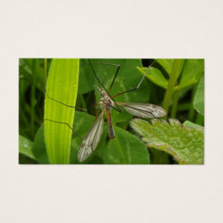 Mosquito   Card De Visita