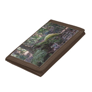 Moss covered fallen tree in a forest wallet