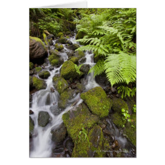 Moss covered rocks with blurred water and ferns card