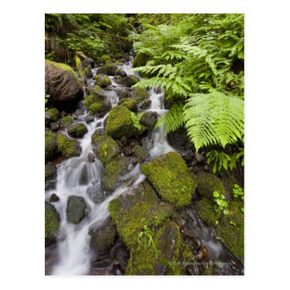 Moss covered rocks with blurred water and ferns postcard