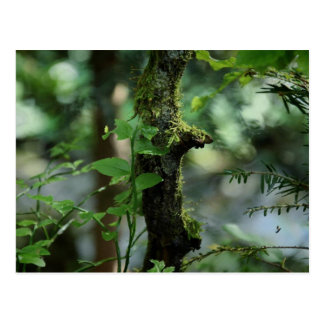 Moss creatures postcard