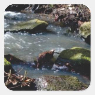 moss in the creek square sticker