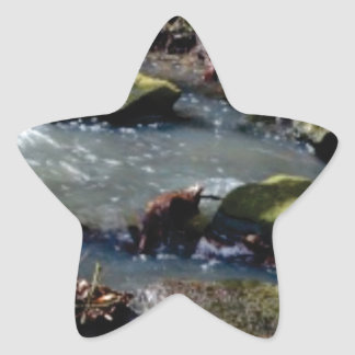 moss in the creek star sticker