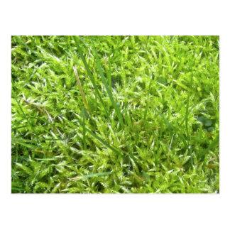 moss in the grass postcard
