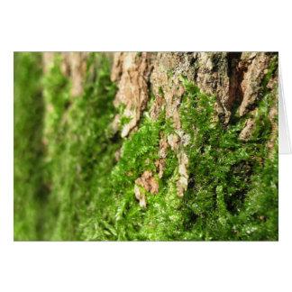Moss On The Tree Bark Card