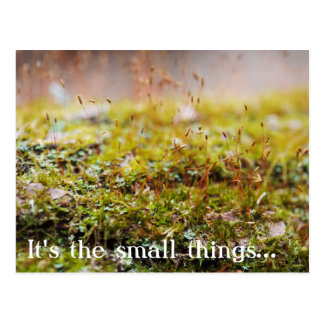 "Moss Postcard - ""It's the small things..."""
