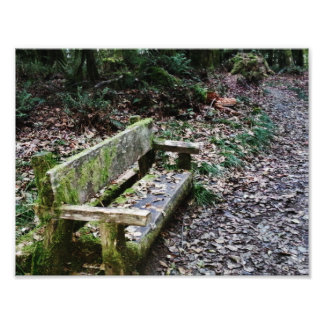 Mossy Bench Nature Trail in Olympic National Park Photo Print