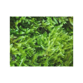 Mossy Canvas Canvas Print
