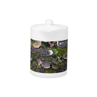 mossy mushroom fun