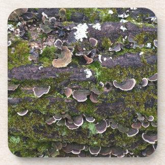 mossy mushroom fun beverage coaster