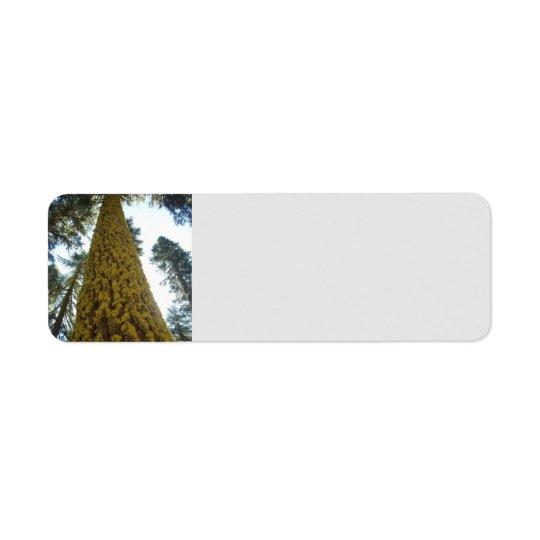 Mossy Red Fir Tree Address Labels