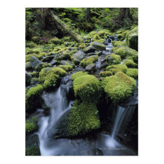 Mossy Rocks in Forest Stream Postcard