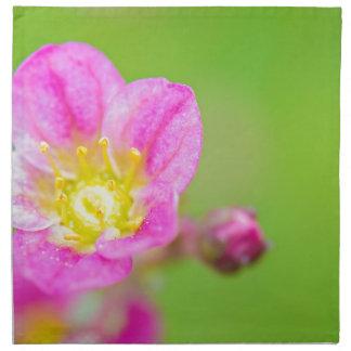 Mossy Saxifrage or rockfoil flowers macro view Napkin