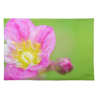 Mossy Saxifrage or rockfoil flowers macro view Placemat