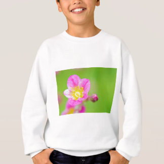 Mossy Saxifrage or rockfoil flowers macro view Sweatshirt