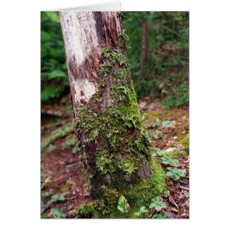 Mossy Tree card