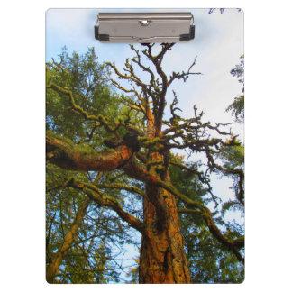 Mossy Tree Clipboard