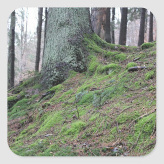Mossy Tree Stump Square Sticker
