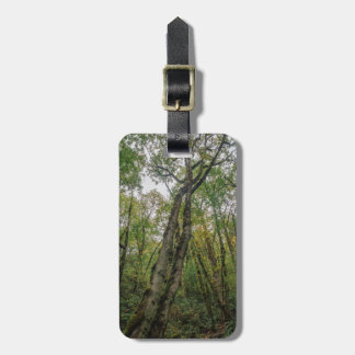 Mossy Trees in Pacific Northwest Luggage Tag