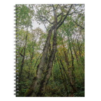 Mossy Trees in Pacific Northwest Spiral Note Book