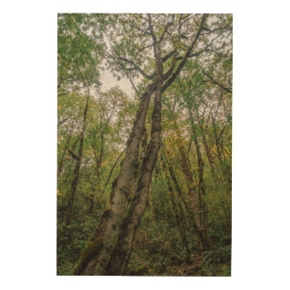 Mossy Trees in Pacific Northwest Wood Canvases