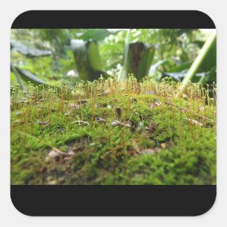 mossy waipio square sticker